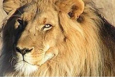 bf369031340186 Geen wilde dieren in Belgische circussen | nrit.nl - trends, nieuws ...